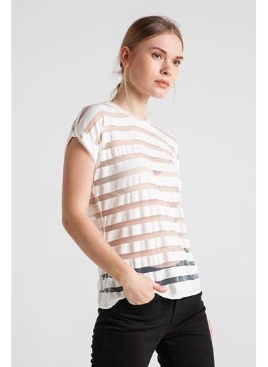 Kocca Çizgili Transparan Tişört Renkli